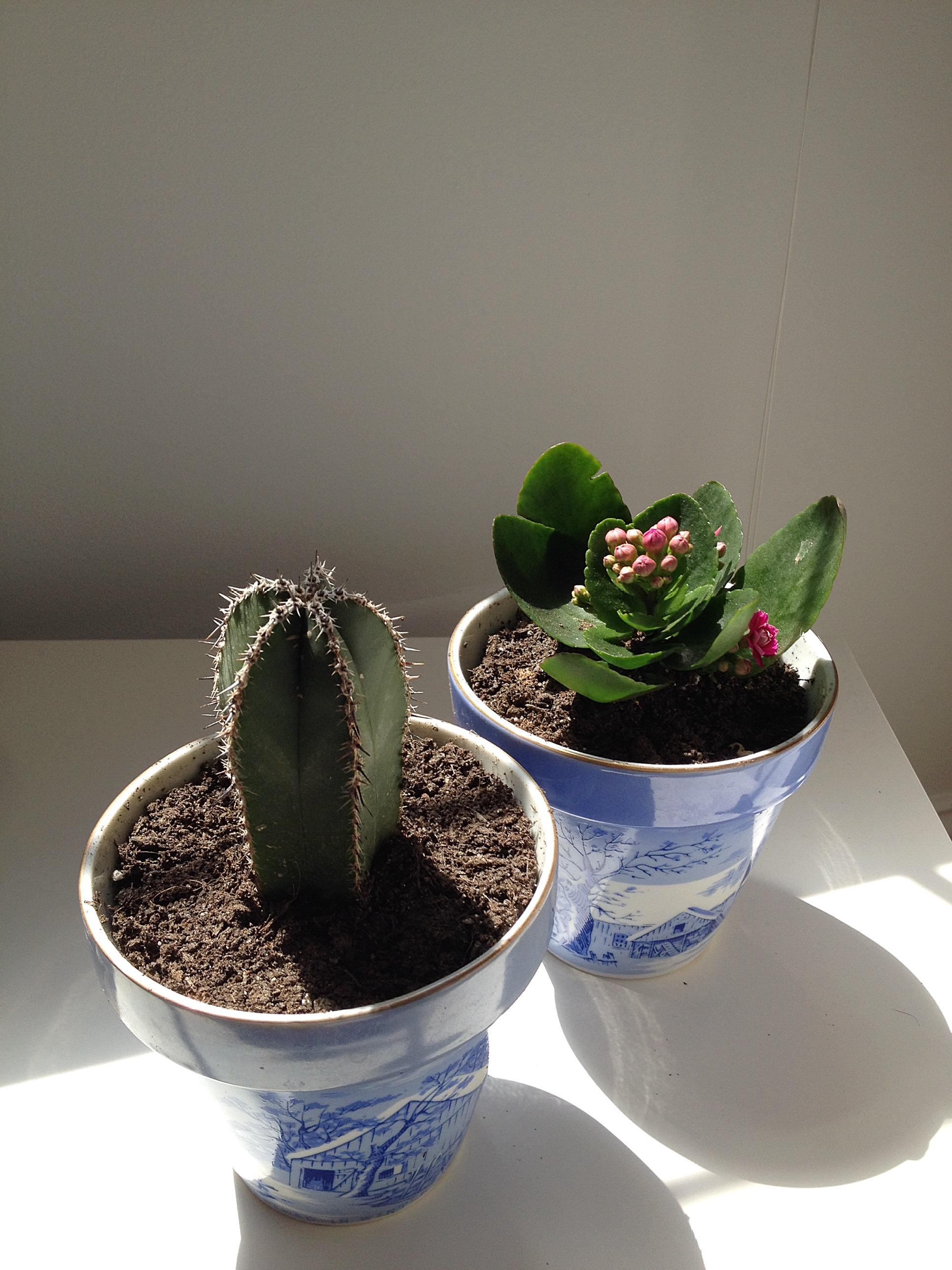 lifelately_succulents