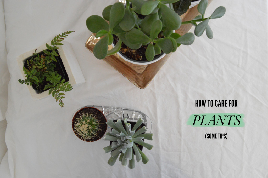 how to care for plants